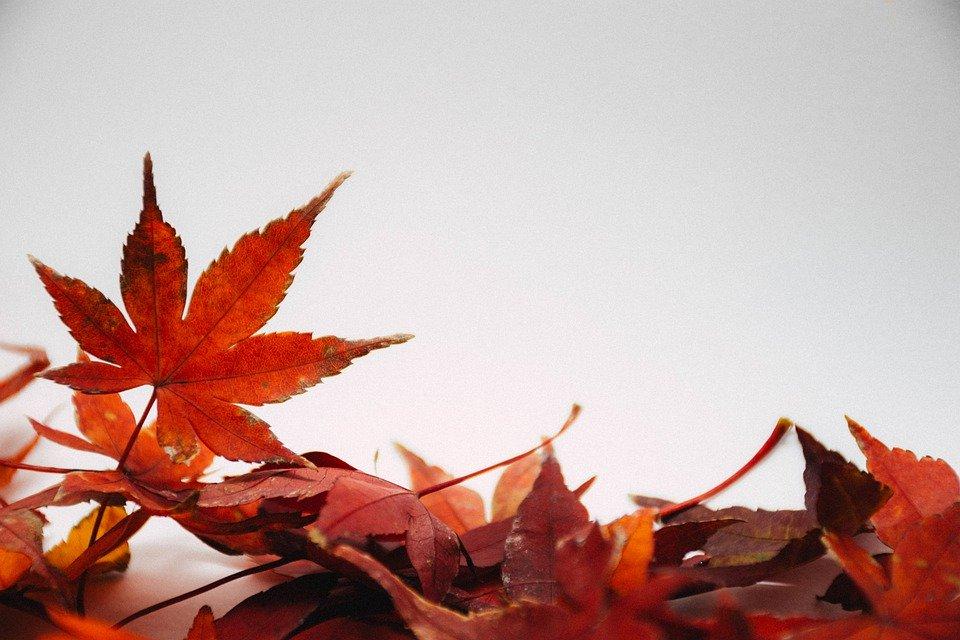 leaves-5300030_960_720